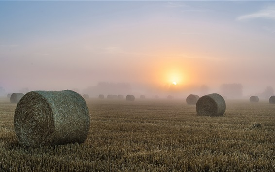 Wallpaper Hay, fields, morning, fog, sunrise