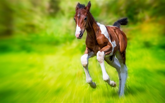 Wallpaper Horse running, green grass, speed