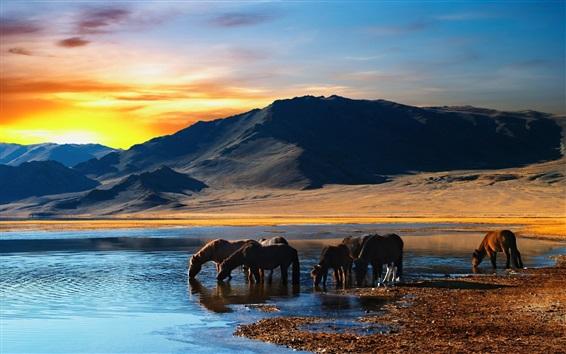 Wallpaper Horses drink water, lake, mountains, sunset