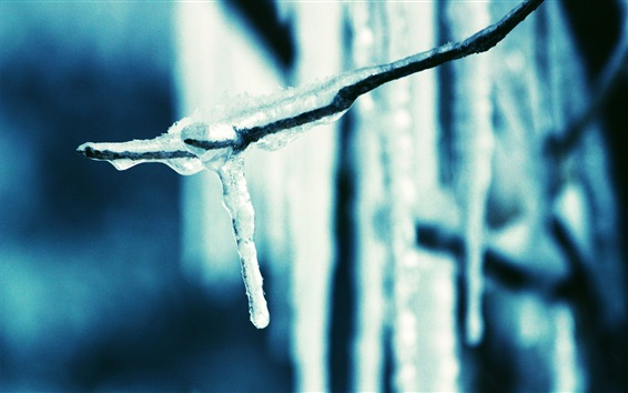 Wallpaper Icicle, winter