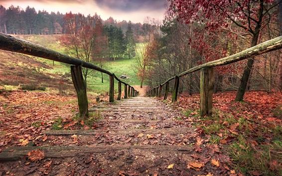 Papéis de Parede Escada, cerca, árvores, outono