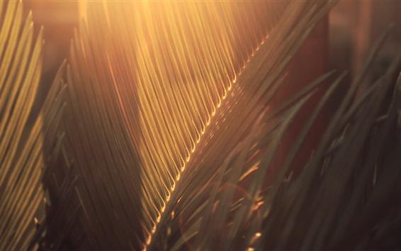 Fondos de pantalla Hojas, sol