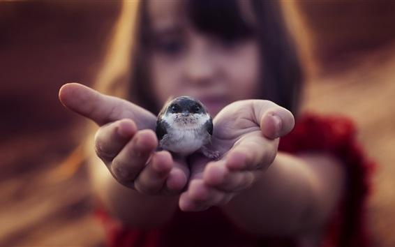Wallpaper Little bird in hand