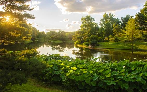 Обои Ботанический сад Миссури, парк, озеро, лотос, деревья, облака, солнечные лучи, США