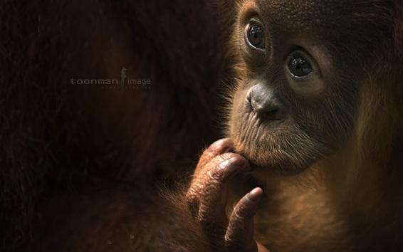 Papéis de Parede Macaco bebê, olha