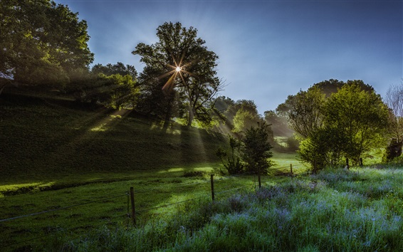 Обои Утро, солнечные лучи, трава, деревья, поля, забор, весна