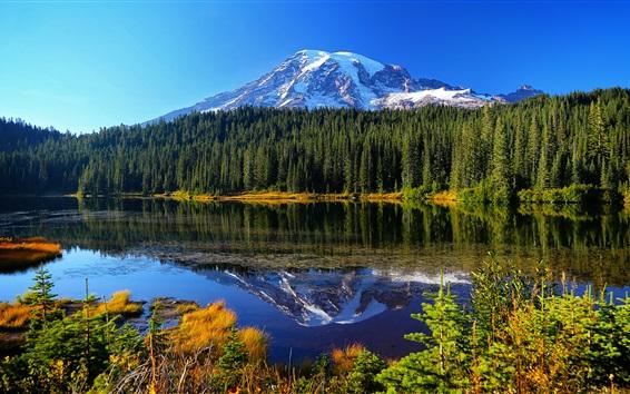 Wallpaper Mount Rainier National Park, lake, trees, mountains, water reflection, USA