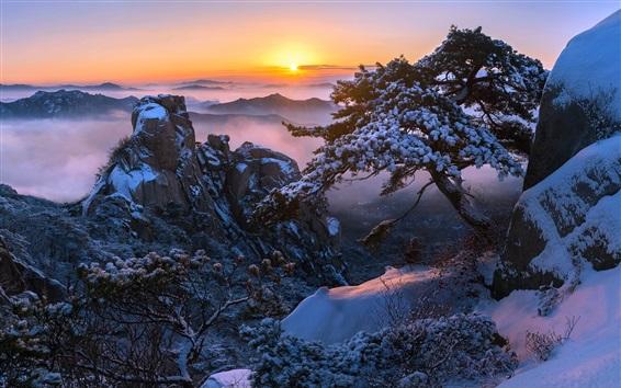 Wallpaper Mountain top, snow, trees, sunrise, winter