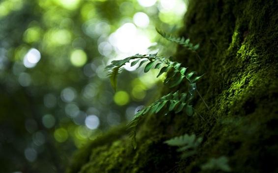 Wallpaper Nature, plants, green leaves, moss
