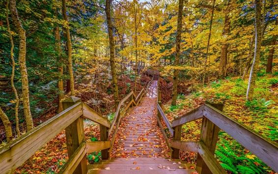 Fond d'écran Parc, chemin en bois, arbres