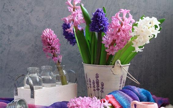 Fond d'écran Fleurs de jacinthe roses, bleues et blanches