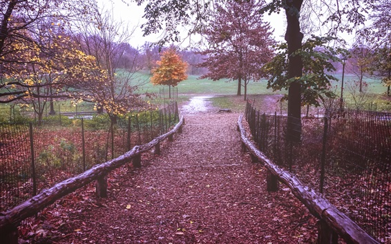 Wallpaper Prospect Park, New York, path, fence, leaves, trees, autumn, USA