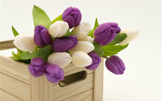 Wallpaper Purple and white tulips, wood box