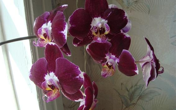 Обои Фиолетовая орхидея, цветы