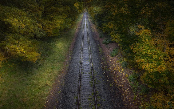 Wallpaper Railroad, bushes, autumn