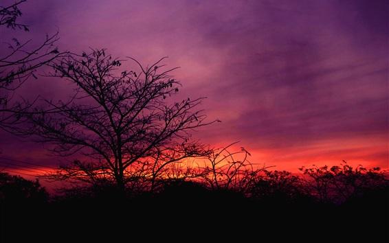 Fondos de pantalla Cielo rojo, árboles, puesta de sol