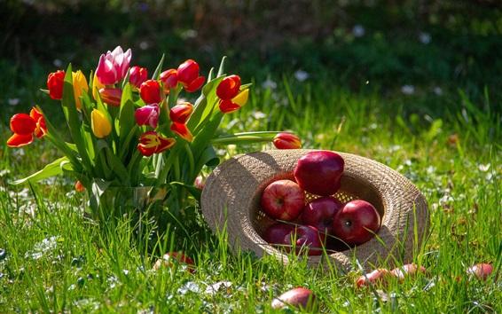Обои Красные тюльпаны и красные яблоки, шляпа, трава