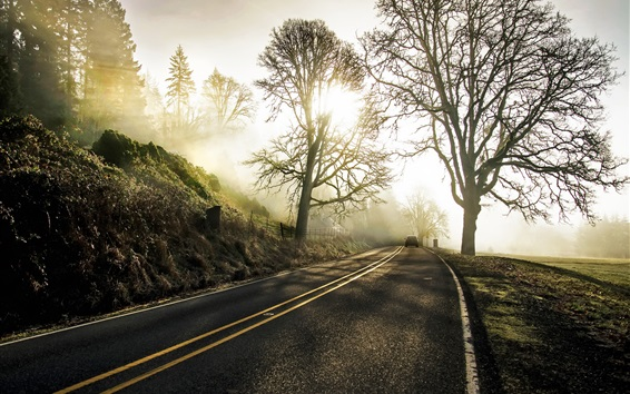 Wallpaper Road, car, trees, sun rays, morning