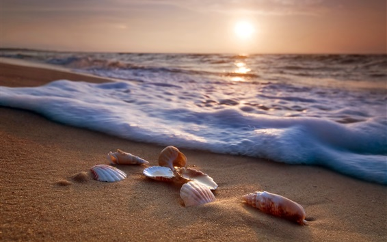 Wallpaper Sea, beach, seashells, waves, foam