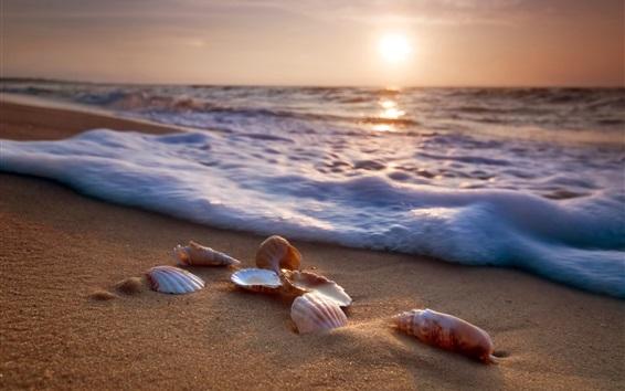 壁紙 海、浜、貝殻、波、泡