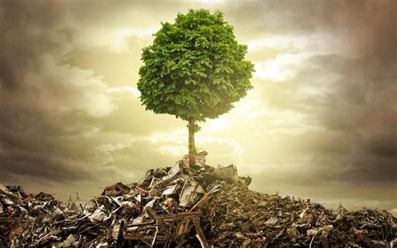 壁紙 単木、ごみ、残骸