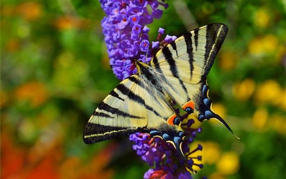 Papéis de Parede Primavera, flores roxas, borboleta