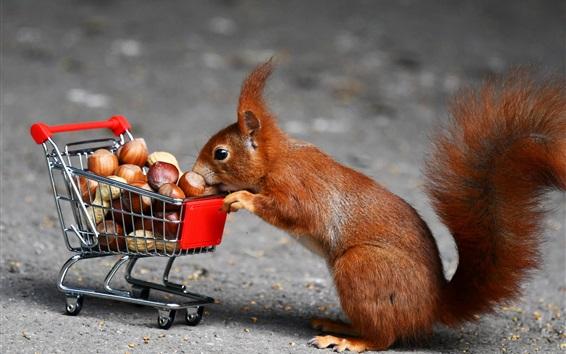 Papéis de Parede Esquilo, carrinho de compras, nozes