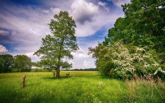 Wallpaper Summer, trees, grass, deer