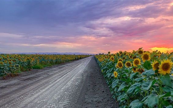 Wallpaper Sunflowers, road, clouds, sunset