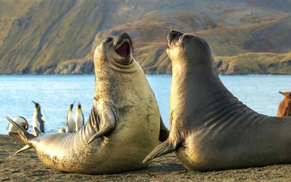 Hintergrundbilder Die Südlichen Sandwichinseln, Robben, Pinguine, Meer