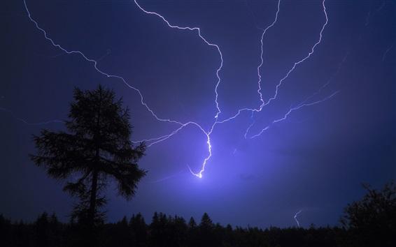 Wallpaper Thunder, lightning, night, sky, trees