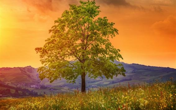 Wallpaper Tree, wildflowers, valley, art drawing style