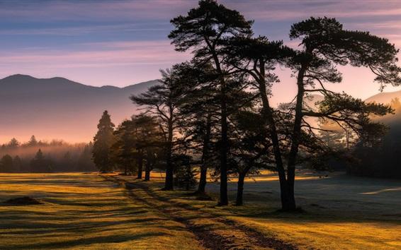 Wallpaper Trees, fields, sun rays, fog, morning