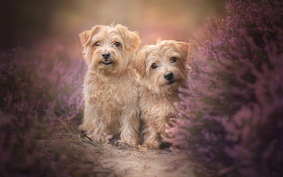 Papéis de Parede Dois cães, peludo, flores