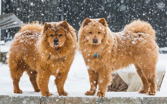 Fondos de pantalla Dos perros, invierno, cubierto de nieve