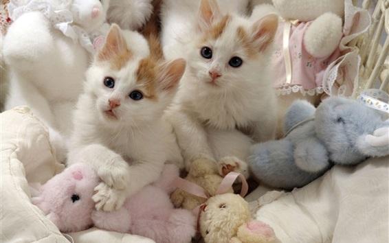 배경 화면 두 마리의 새끼 고양이 및 장난감