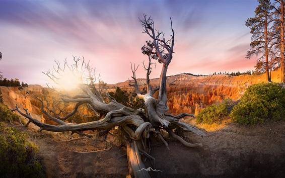 Wallpaper USA, Utah, Bryce Canyon, trees, sunset
