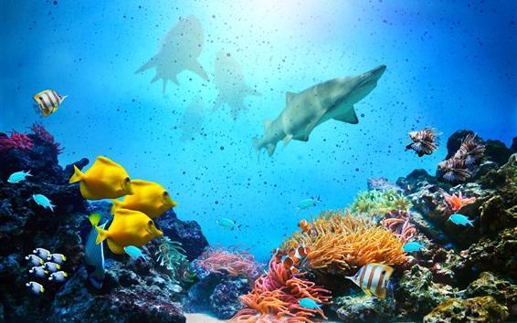 Fond d'écran Sous l'eau, poisson, corail, requin, mer