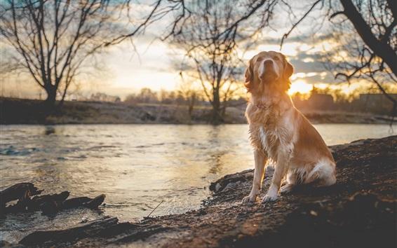 Wallpaper Wet dog, riverside, river, trees, sunset