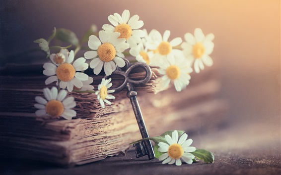 Wallpaper White chamomile flowers, book and key