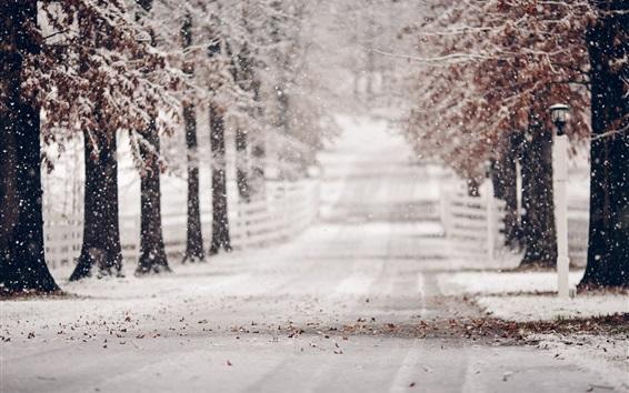 Wallpaper Winter, road, trees, snow, blurry