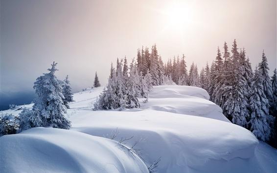 壁紙 冬、太い雪、木々、太陽