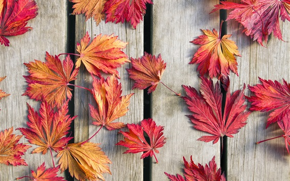 Wallpaper Wood board, red maple leaves