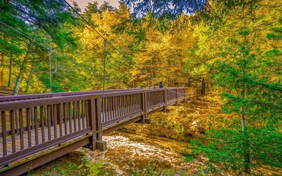 Fond d'écran Pont en bois, arbres, rivière, automne