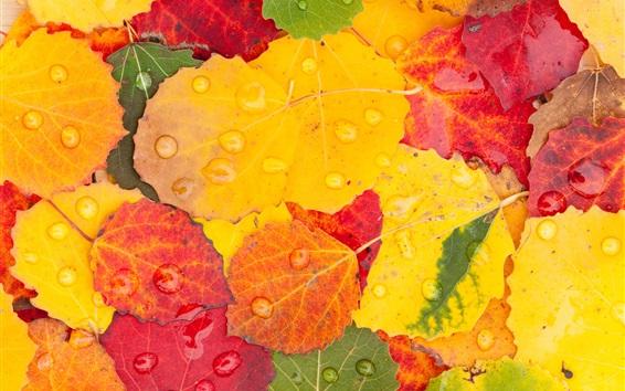 Fond d'écran Feuilles jaunes et rouges, gouttes d'eau, automne