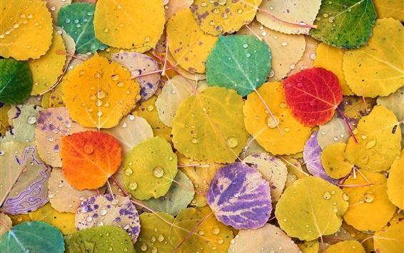 壁紙 黄色、赤、紫、ポプラの葉、カラフル