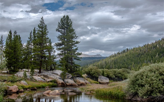 Wallpaper Yosemite National Park, trees, clouds, mountains, California, USA