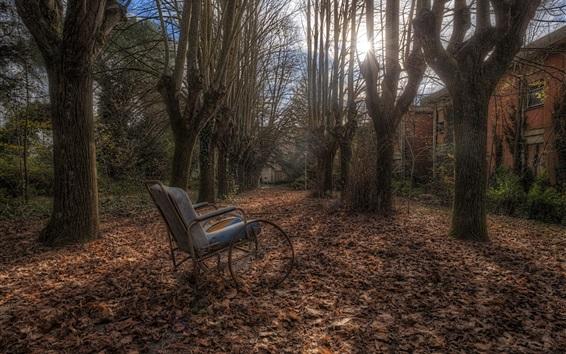 Wallpaper Autumn, trees, stroller