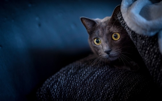Wallpaper Black cat look, face, yellow eyes