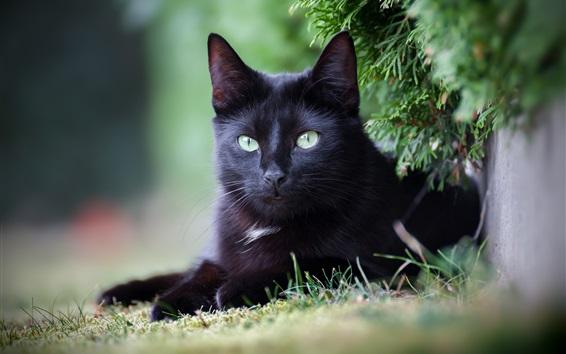 Обои Черная кошка, отдых, веточки